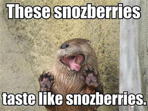 Funny Otter Meme - its a meme world