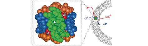 nanospheres   transport negatively charged ions