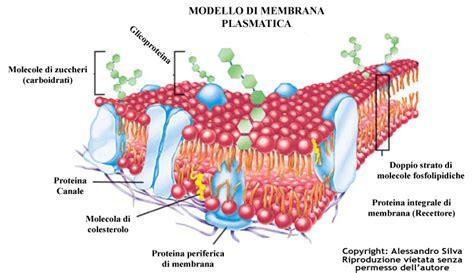 lade sodio le cellule eucariote e procariote strutture esercizi