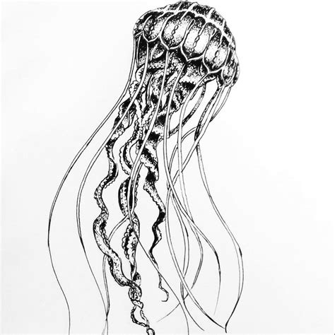 brilliant jellyfish sketch by annacolt on deviantart