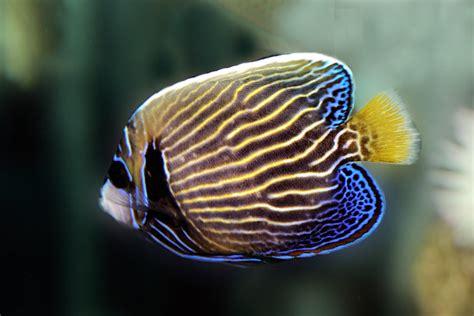 living travel australia queensland fish   great