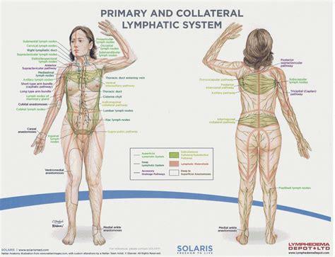 groin area diagram lymph nodes in the groin diagram anatomy organ