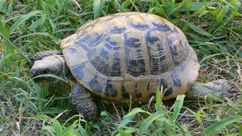 lade per tartarughe di terra prezzi di scarpe donna testuggini di terra