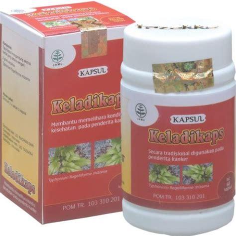 Tanaman Obat Herbal Keladi Tikus obat kanker menghilangkan dahak dengan herbal keji beling tazakka