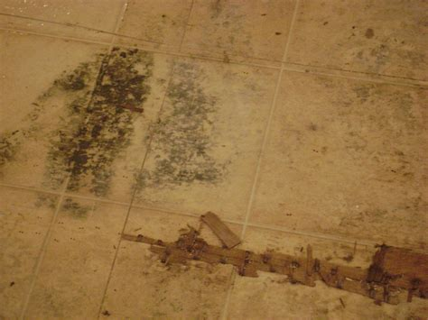 what action can be taken to protect wood floor from water