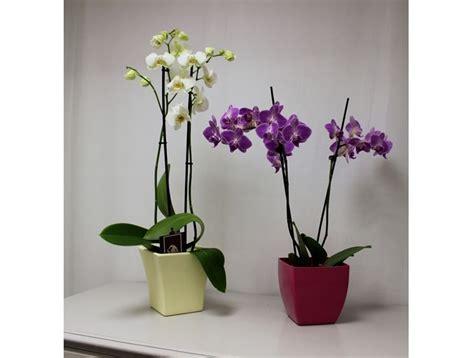 piante per interno piante per interno inquinamento domestico 15 piante da