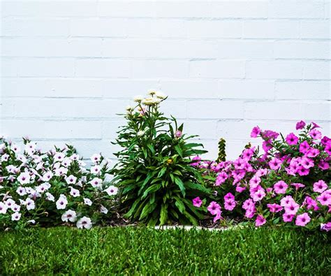 flowering summer shrubs the best flowering plants for summer homes