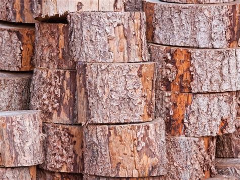 what s the difference between hardwood and softwood