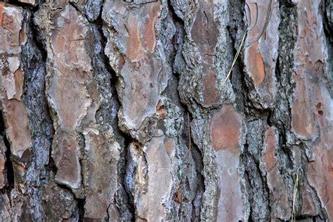 free photo tree tribe log bark tree bark free image