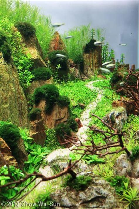 aquascapes online 49 best aquascapes octopus gardens images on pinterest