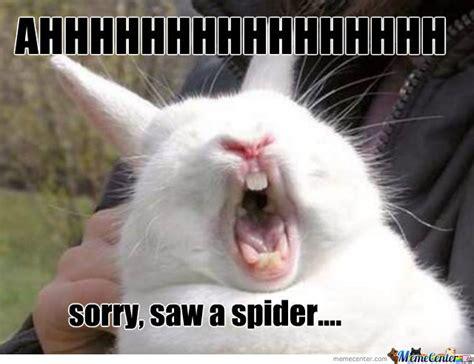 Rabbit Meme - scared rabbit by umzum meme center