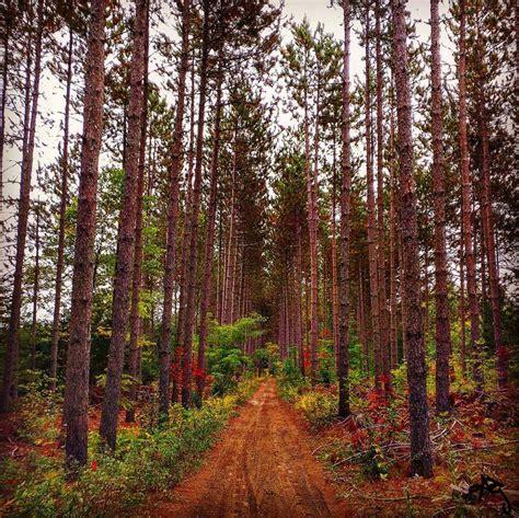 ganaraska forest ontario trails council