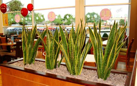 grow these easy indoor plants for fresh air blog nurserylive com gardening in india