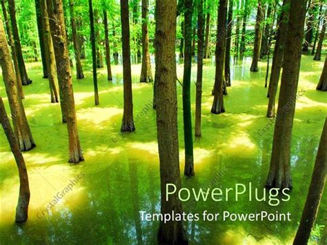 powerpoint template flooded forest with green trees with