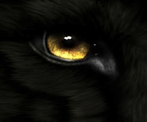 gold eye wallpaper golden eyes dogs animals background wallpapers on