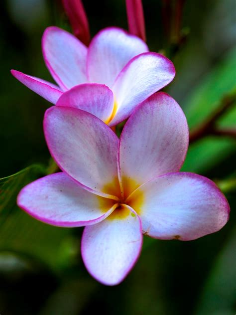 fiori tropicali fiori tropicali photoscuba