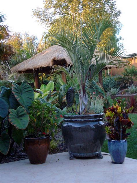 Tropical Planter Ideas by The Idea Of A Tropical Look For The Backyard