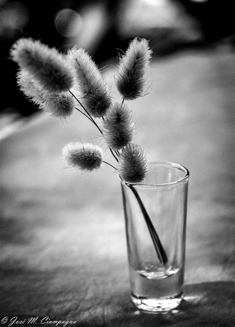 imagenes y fotos en blanco y negro bodeg 243 n en blanco y negro las fotos del profe jos 233