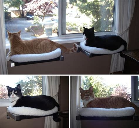 Window Shelf For Cats by Cat Window Window And Cats On