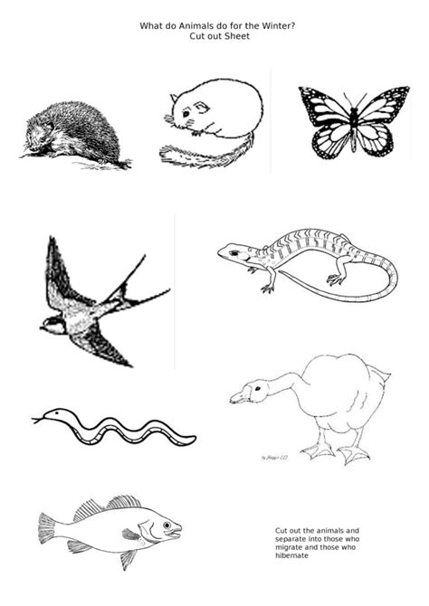 coloring pages of animals that hibernate hibernating animals free colouring pages