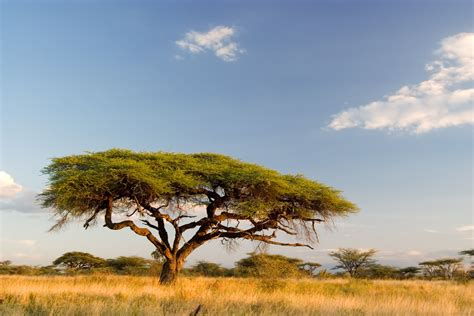 african landscape kenya africa landscape wallpaper