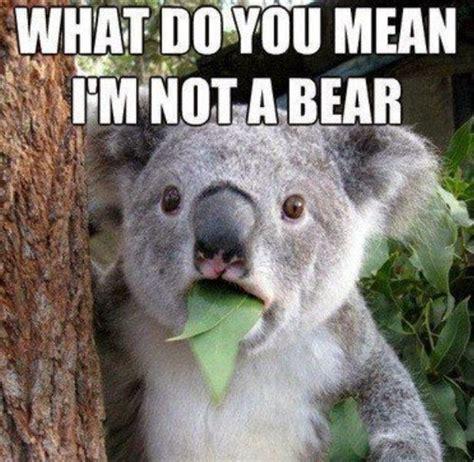 Funny Australia Day Memes - australia day blog hop meme buster edition