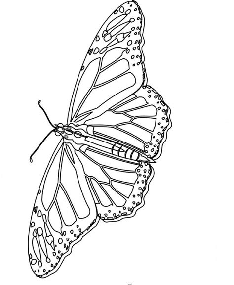 cool butterfly coloring pages monarch butterfly coloring pages coloring home