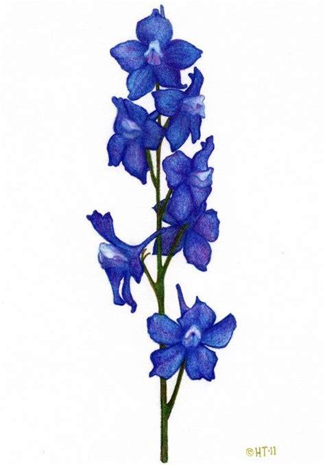 larkspur flower tattoo designs larkspur found on etsy