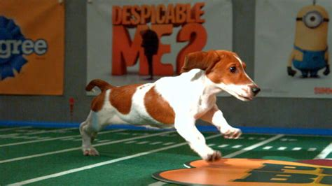 puppy bowl channel puppy bowl ix starting lineup puppy bowl animal planet