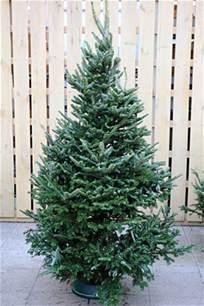 christmas trees rhs gardening