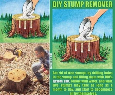 17 best ideas about stump removal on removing