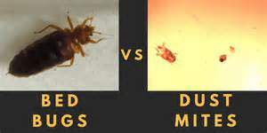vs bed bed bugs house dust mites what s the difference