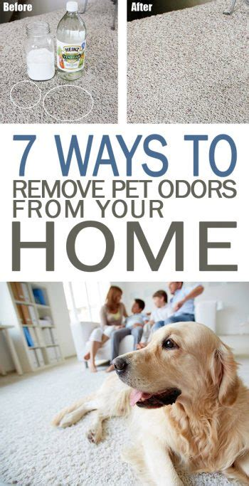 ways  remove pet odors   home  days