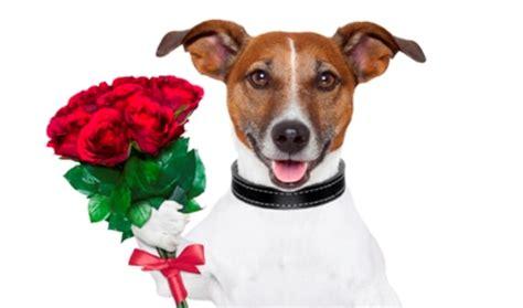 Image result for Dog
