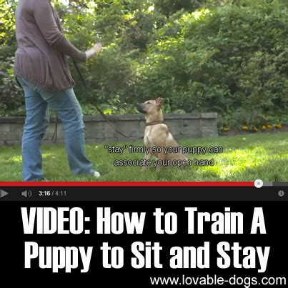 how to a to sit and stay lovable dogs how to a puppy to sit and stay lovable dogs