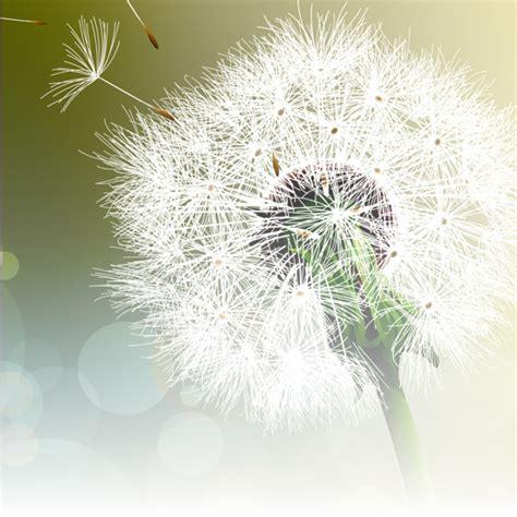 Dandelion Wishes dandelion wishes gala monash children s hospital