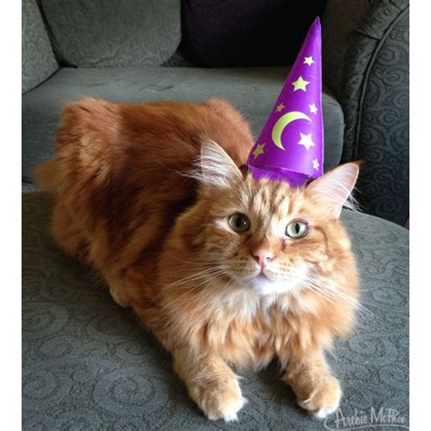 magic cat purple wizard hats for magical cats