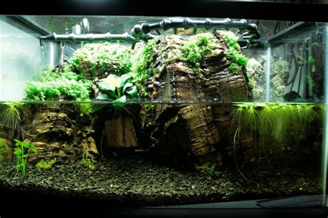 Aquascape Pool Design Freshwater Aquaria Considerations For Scaping And