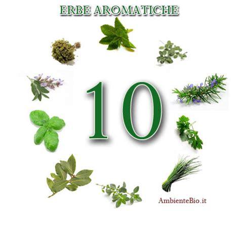 erbe aromatiche in casa erbe aromatiche coltivate in casa ambiente bio