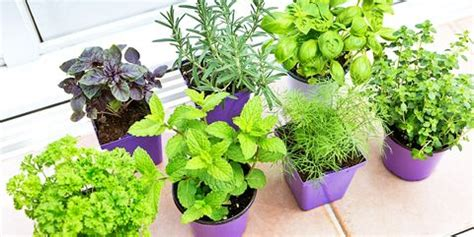 indoor vegetable garden ideas   grow vegetables indoors