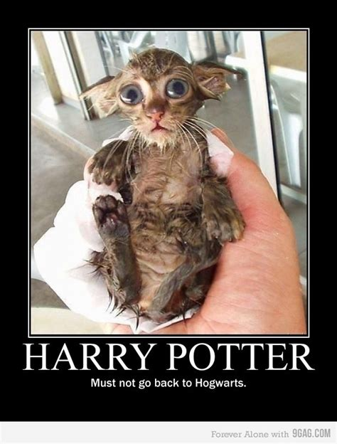 Dobby Meme - pin by andie bartol on the life pinterest