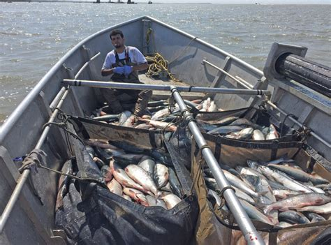 bristol bay drift boats for sale a hundred grand set net salmon fishing in bristol bay