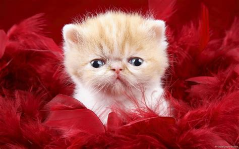 wallpaper baby and cat kitty world baby kitten pictures