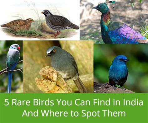 5 rare birds you can find in india and where to spot them