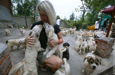 at sight puppy and kitten adoption center homeless animals rescue center in nanjing 187 gagdaily news