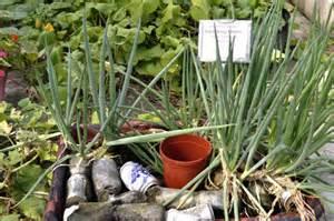 garden socks container gardening road trip echo and worden farm redland rambles