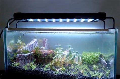aquarium mit led beleuchtung led beleuchtung aquarium erfahrungen 220 ber ideen zu