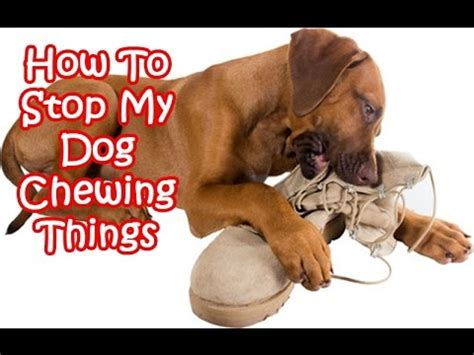 how to dogs not to chew how to stop my chewing things