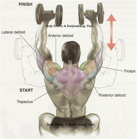 shoulder press diagram anterior view of shoulder press diagrams
