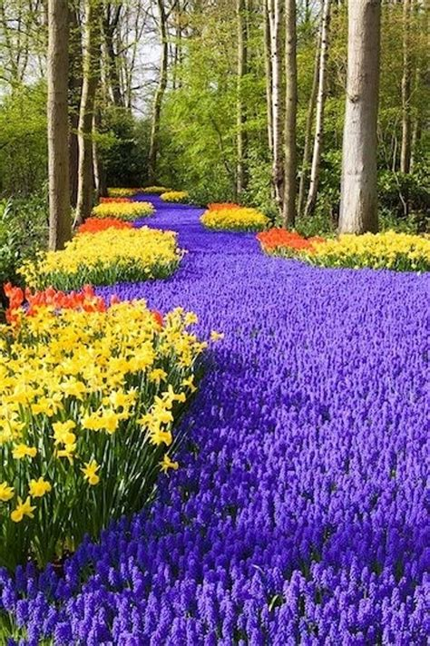 Beautiful Flower Garden In The Holland Beautiful Flower Garden In The World